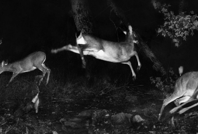 "Alfred Ehrhardt Stiftung | Presentation: Sonia Voss ""Hunting Wild Life With Camera And Flashlight. George Shiras (1859-1942), Pionier Der Wildlife Photography"""