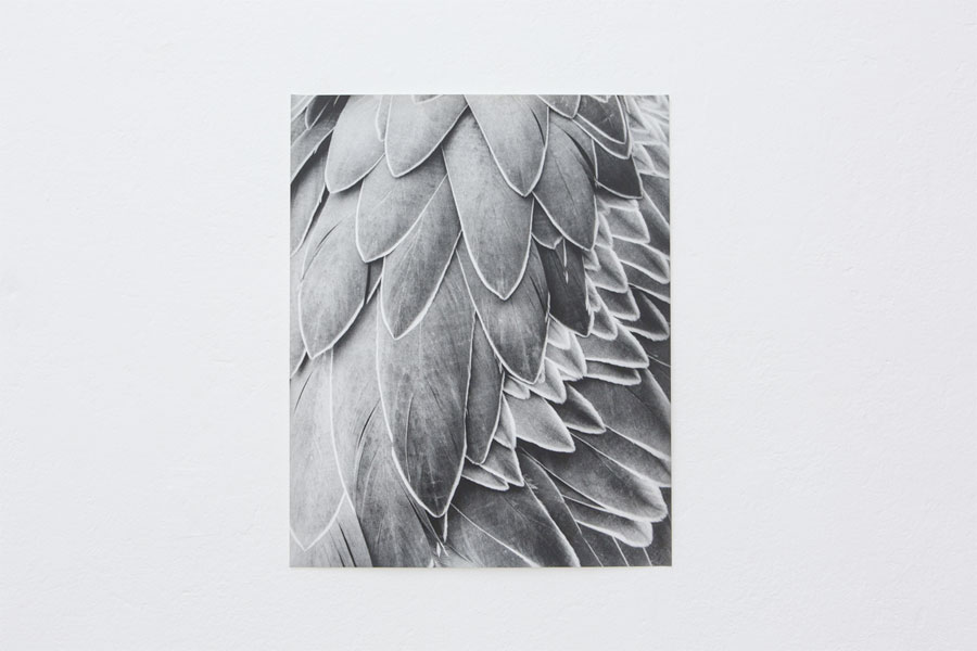Works: © Jochen Lempert, Installation View At Between Bridges: Feathers, 2014