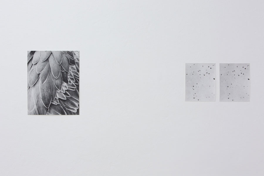 Works: © Jochen Lempert, Installation View At Between Bridges: Feathers, 2014; Untitled (Raindrops), 2010