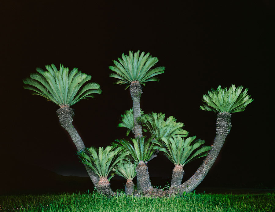 Palm Tree I, From The Series Itoshima, 2011 © Juliane Eirich