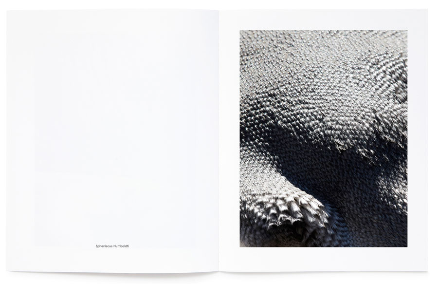 © Thomas Lohr, From The Limited Edition Book »Birds«, 2015