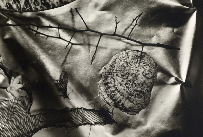 Alfred Ehrhardt Foundation |»NAUTILUS. Snails, Mussels, And Other Mollusks In Photography«
